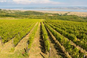 turism viticol dragasani