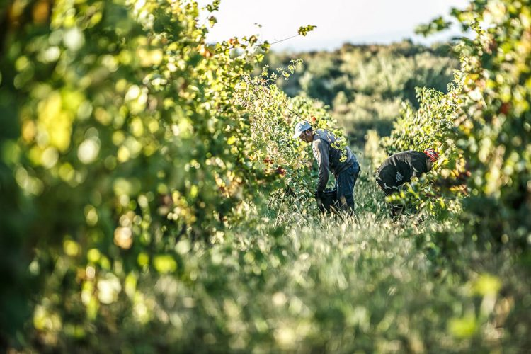 turism viticol prahova