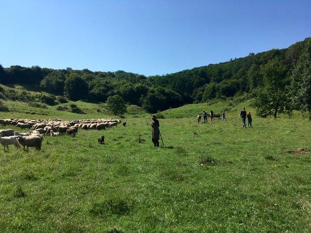 activitati turistice transilvania
