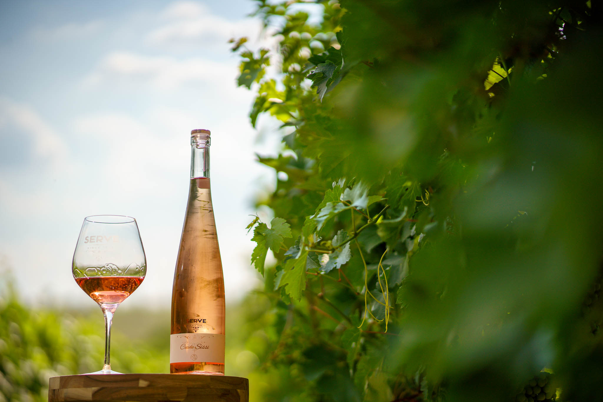 degustari vin podgoria dealu mare